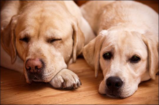terapia perros residencia jesan